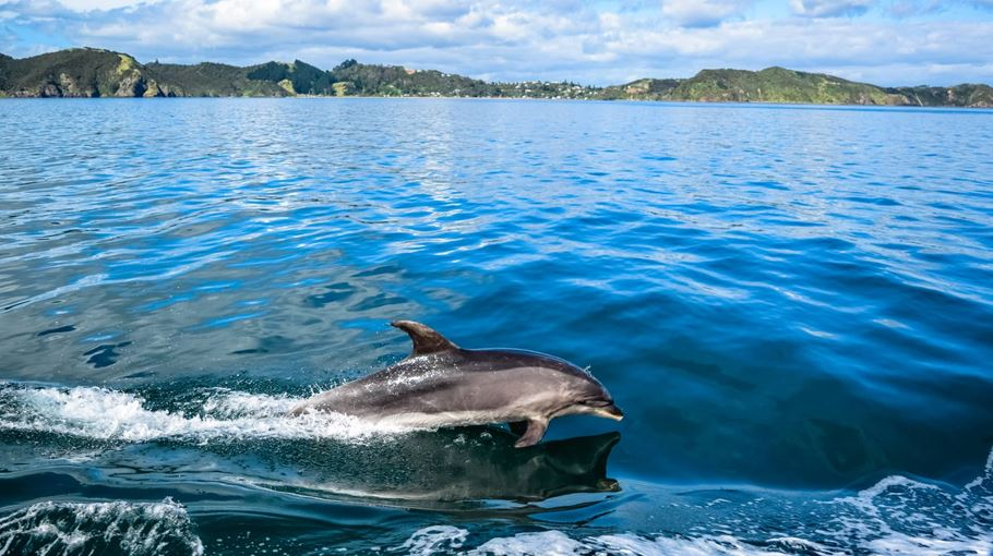 Bay of islands private tours dolphins