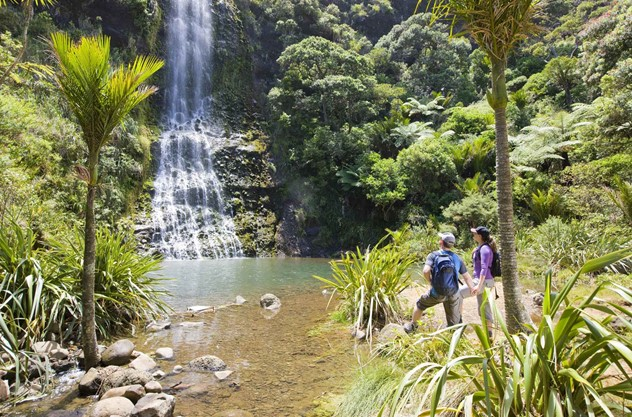 Auckland Maori Luxury Tour - From Coast to Rainforest: